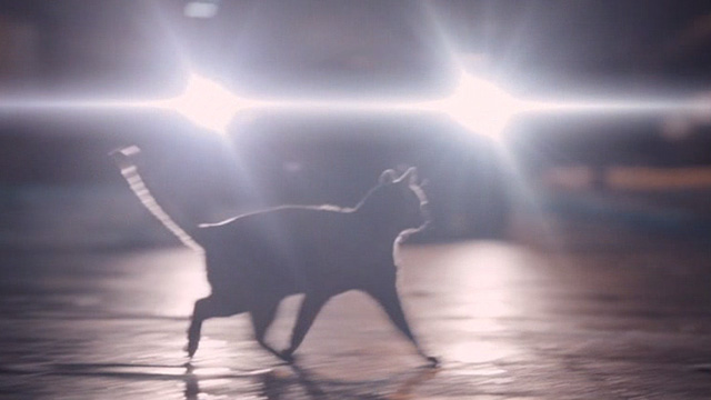 Bullet to the Head - black cat in headlights of car on street