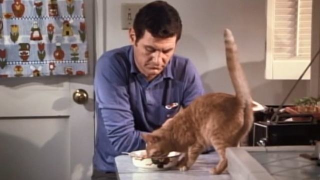 Bunny O'Hare - orange tabby cat on table with husband Lloyd Herb Marlis
