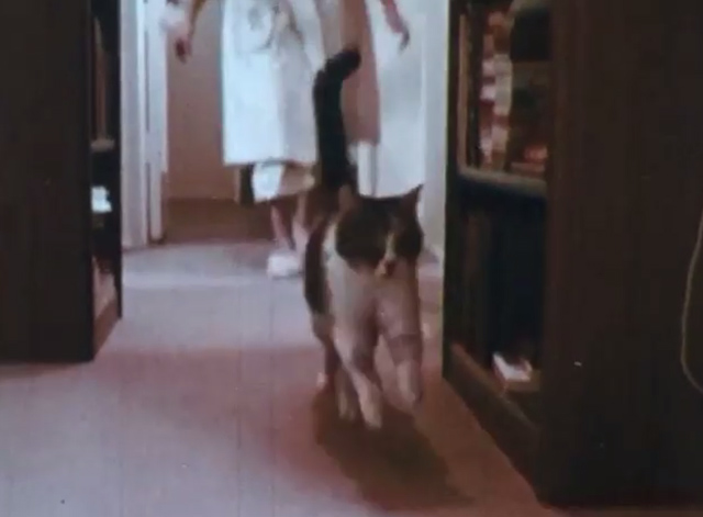 Care of Pets - calico cat running down hall away from girl Annette
