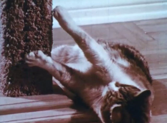 Care of Pets - calico cat scratching on post