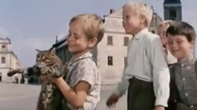 The Cassandra Cat - Mokol tabby cat paraded into town by children