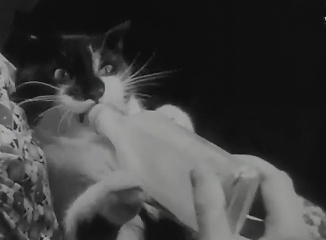 Cat and Bottle newsreel Tim close