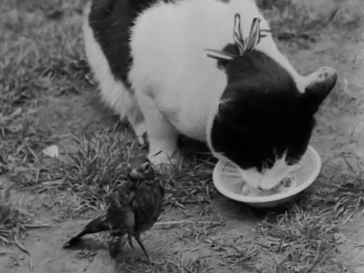 Cat and Cock Robin! - newsreel of Puffy the cat and injured bird one year later