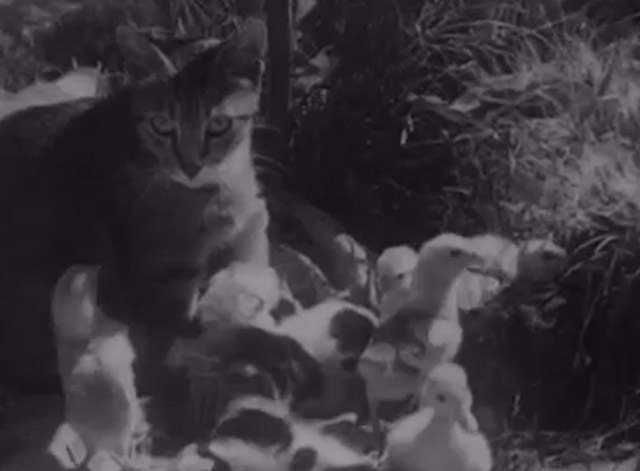 Cat and Ducklings - Mama cat surrounded by baby ducks