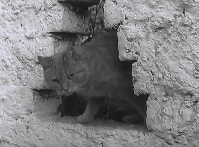 Cat and Monkey - orange tabby in hole in wall