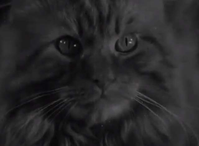 The Cat and the Mouse - close up of long haired tabby cat