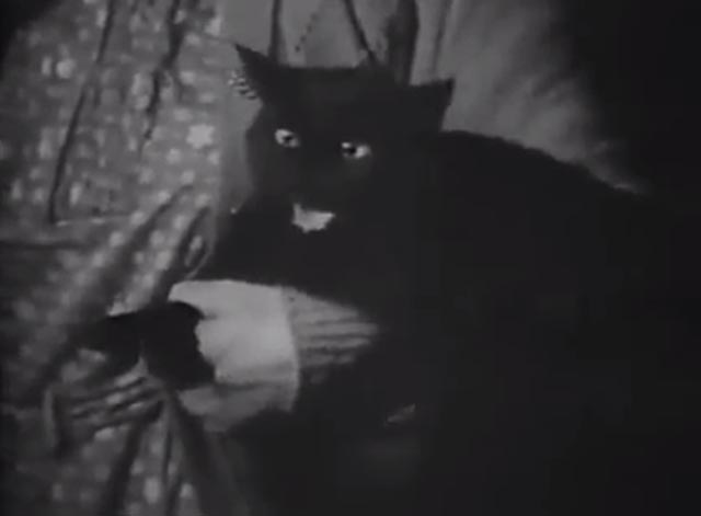 The Cat Creeps - black cat hissing