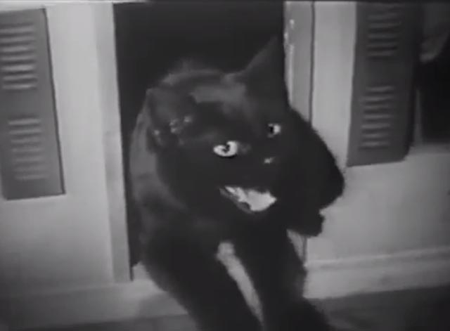 The Cat Creeps - black cat yowling in dollhouse