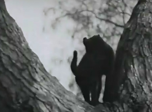 Our Gang - Cat, Dog & Co. black cat hissing in tree
