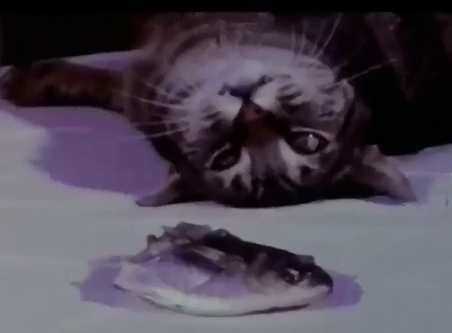 Cat Food - tabby cat lying behind fish head