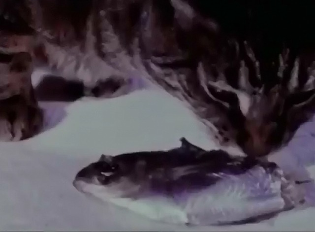 Cat Food - tabby cat eating fish head