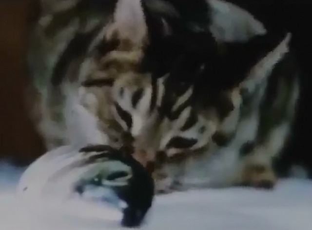 Cat Food - tabby cat eating yet another fish head