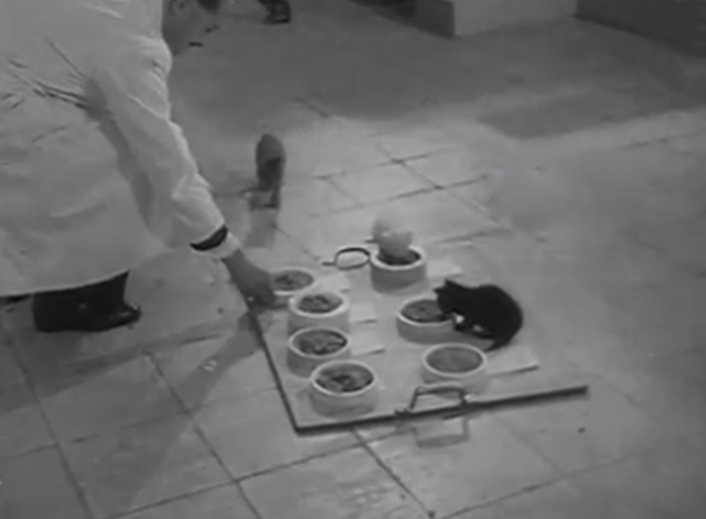 Cat Food - man in white smock setting out bowls of food for cats