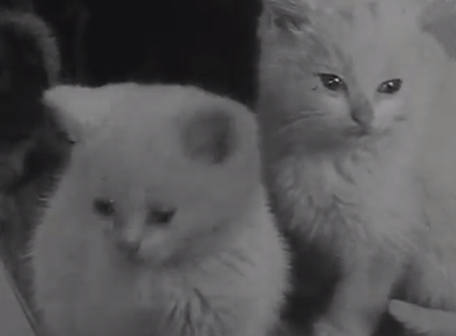 Cat Food - two white kittens
