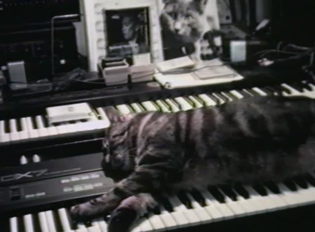 Cat Listening to Music - Bengal cat Guillaume-en-Egypte lying on keyboard