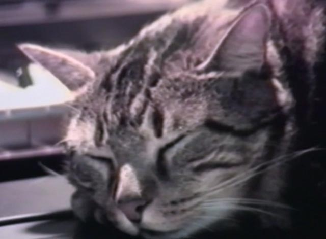 Cat Listening to Music - close up of Bengal cat Guillaume-en-Egypte sleeping