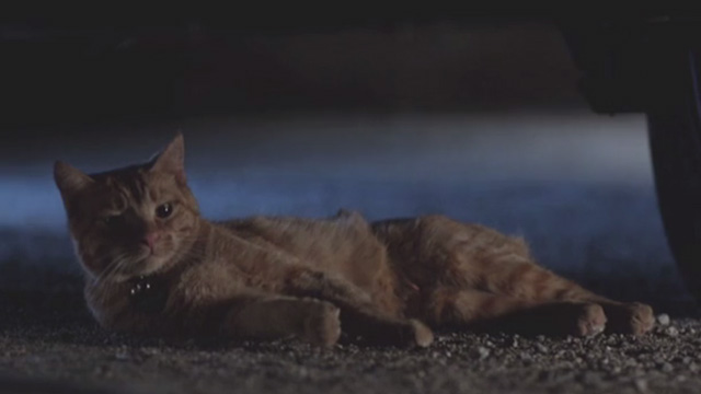 Cat Power - orange tabby cat Meghan Charlie lying under car