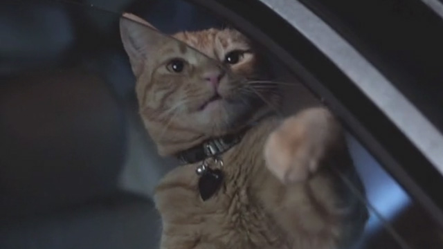 Cat Power - orange tabby cat Meghan Charlie inside car pawing at window
