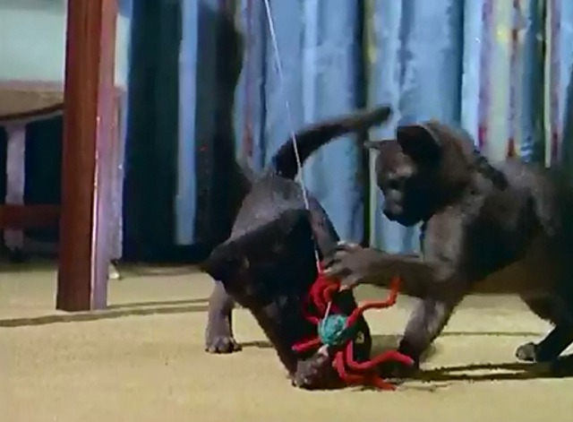 Cat's Accessories - kittens playing with pipe cleaner spider