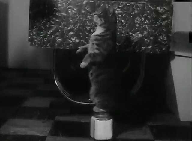 Cats Can Be Trained - Tooshy the tabby cat stands on his hind legs on a sugar jar