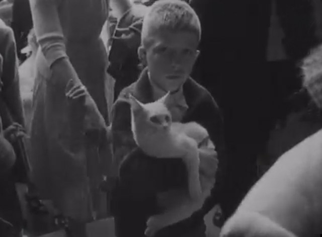 Cats, Dog, Mice and a Goldfish Go to Church - boy carrying white cat
