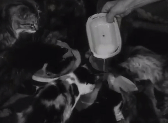 Cats' Home - milk being poured for cats