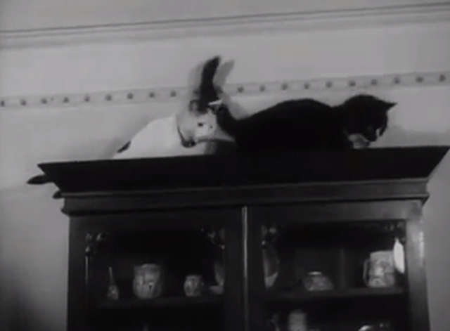 Cats' Home - white cat and tuxedo cat on top of cabinet
