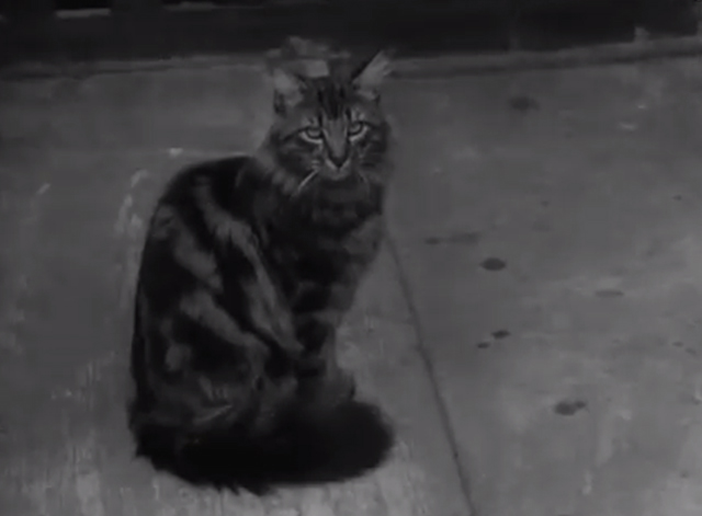 Cats' Home - long-haired tabby cat Tinker sitting outside of apartment flat