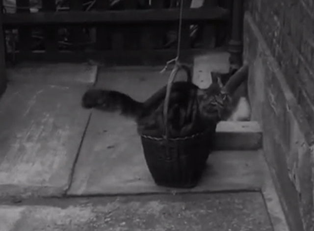 Cats' Home - long-haired tabby cat Tinker climbing into basket outside of apartment flat