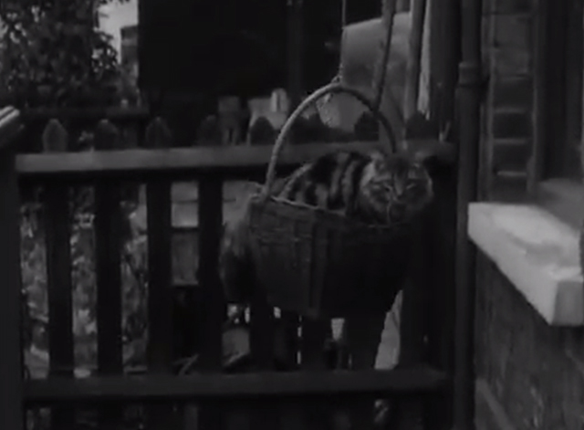 Cats' Home - long-haired tabby cat Tinker being lifted by basket outside of apartment flat