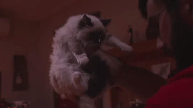 The Cat - Snowshoe Himalayan cat Billie being held up by Jim