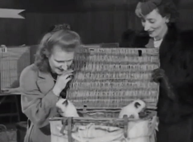 Cat Show 1948 - Irene Ashton and Diana Morrison looking into basket of Siamese kittens