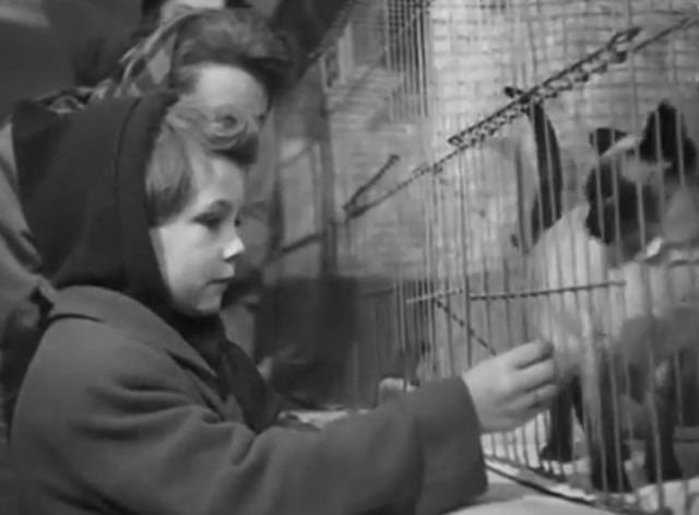 Cat Show 1948 - little girl looking at Siamese kitten in cage