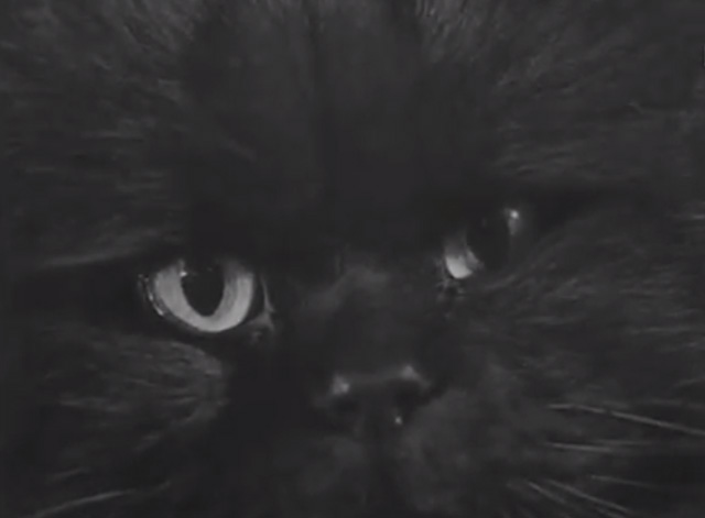 Cat Show 1948 - extreme close up of black Persian cat
