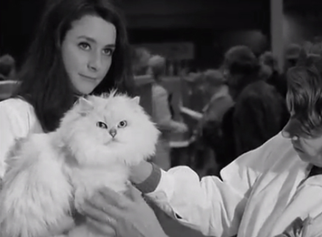 Cat Show Olympia 1969 - white Persian champion cat Coylum Marcus being held