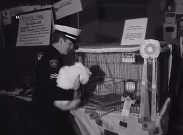Cat Show Olympia 1969 - white Persian champion cat Coylum Marcus being put in cage by security guard
