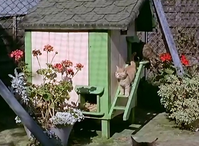Cat Village - kittens inside colorful little house