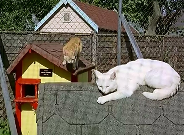 Cat Village - cats sleeping on top of little houses