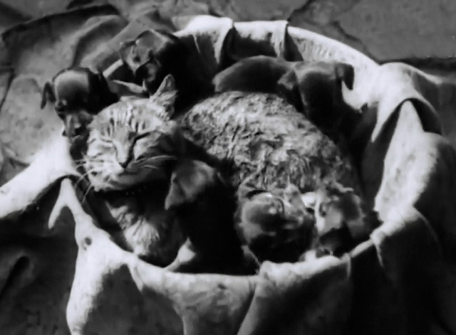 Caught by the Camera #63 - tabby cat mother with basket of puppies