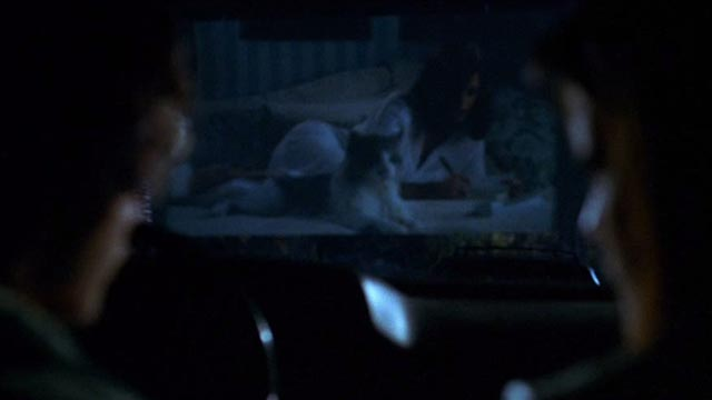 Cecil B. Demented - Maine Coon cat on bed on drive in screen