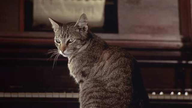 Chamber of Horrors - tabby cat sitting on piano stool by player piano