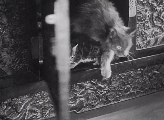 Charlie Chan in Shanghai - gray cat stepping out of cabinet