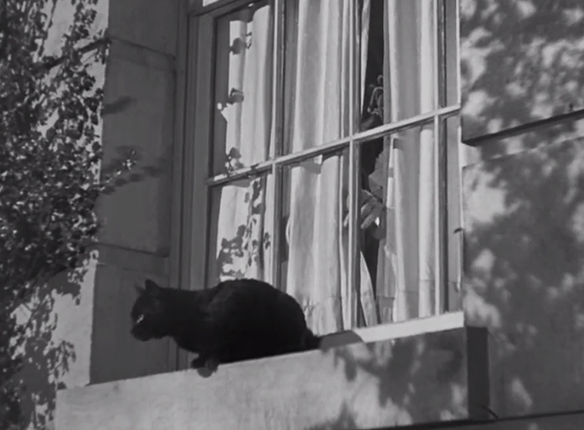 Charlie Chan at Treasure Island - black cat on windowsill