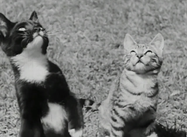 A Child Went Forth - tuxedo kitten and tabby kitten looking up