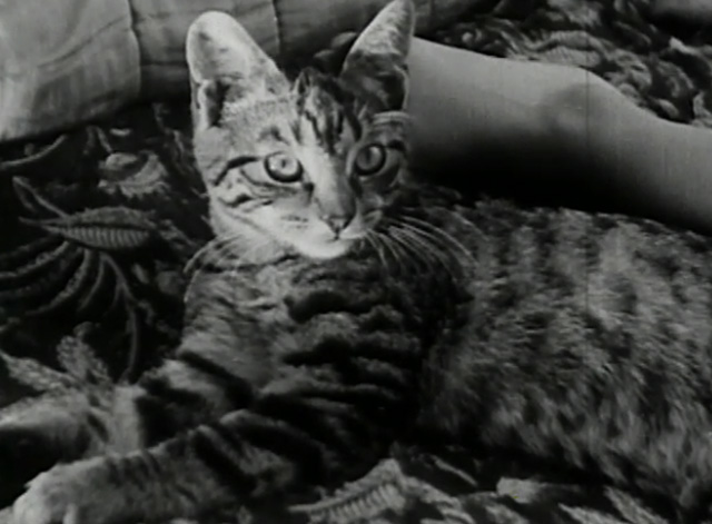 A Child Went Forth - tabby kitten on bed
