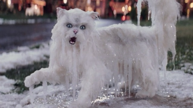 Christmas with the Kranks - white Persian cat Muffles frozen on walk close