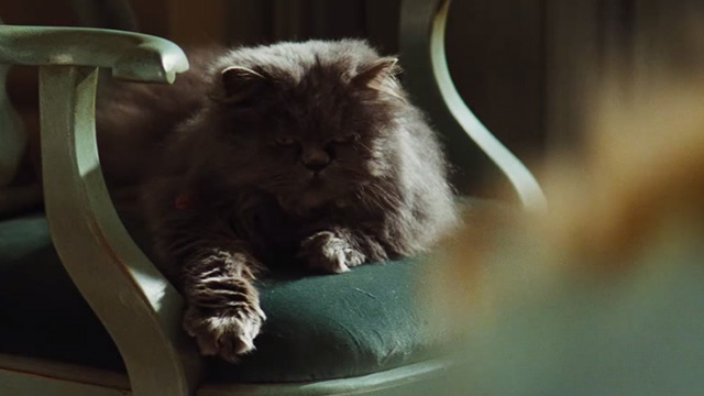 Cinderella live action - grey Persian cat Lucifer on chair looking smug