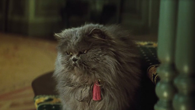 Cinderella live action - grey Persian cat Lucifer