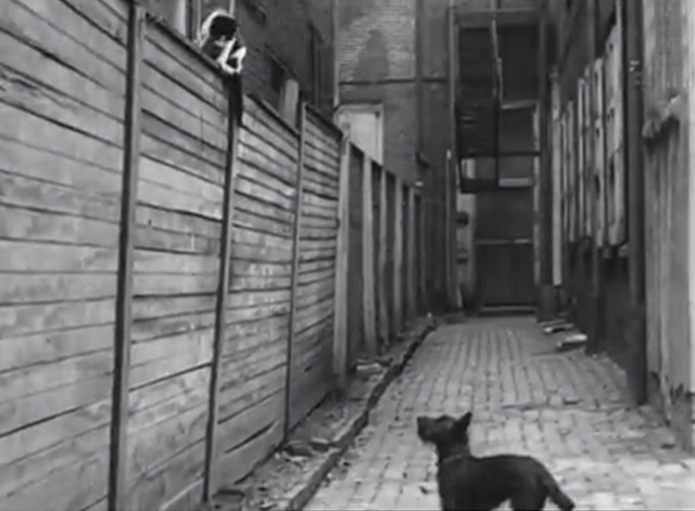 Cinetopicalities In Brief No. 139 - tuxedo cat on fence with Scotty Dog below