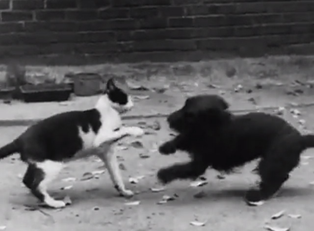 Cinetopicalities In Brief No. 139 - tuxedo cat and Scotty Dog play fighting in alley